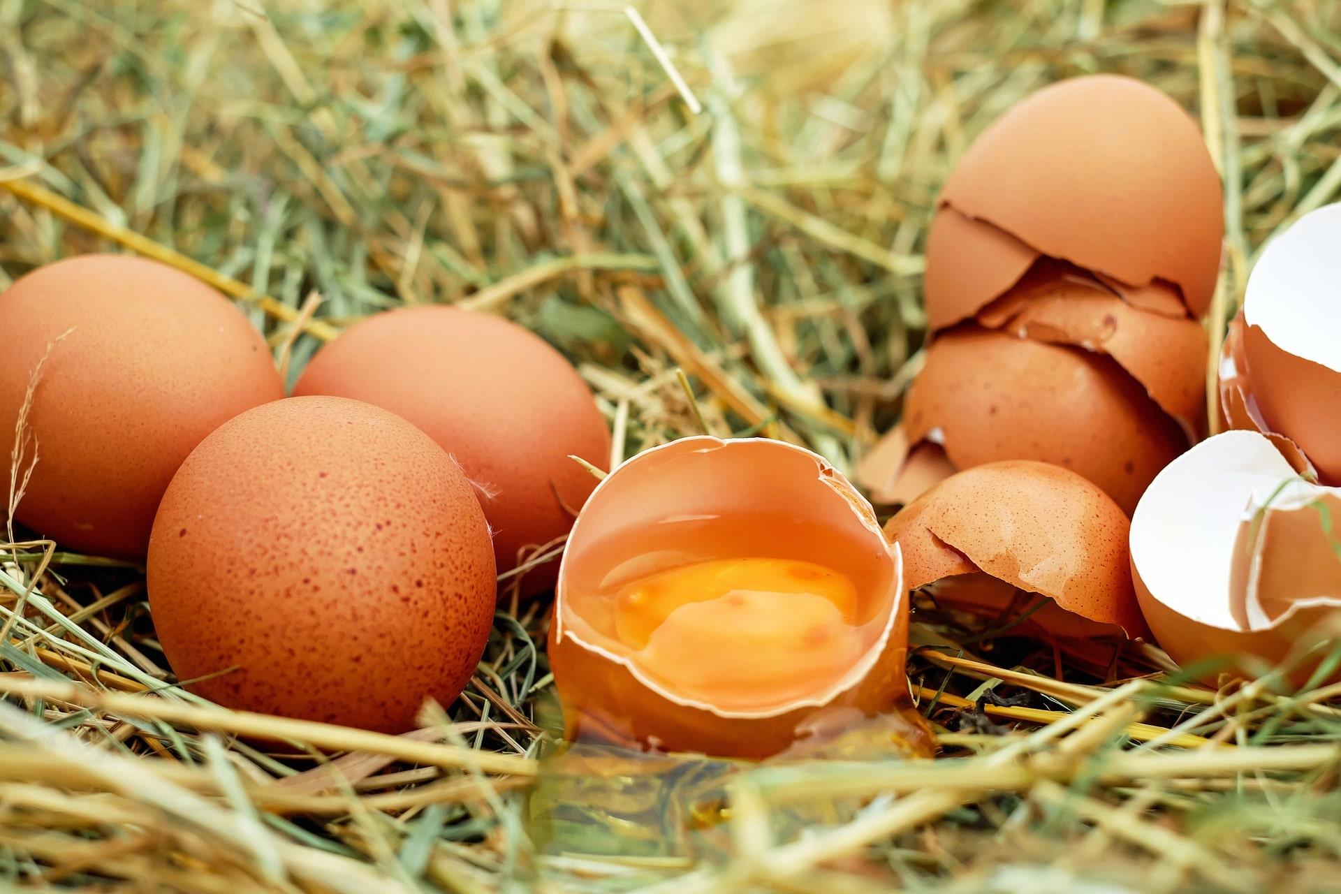 Huevos, alimentos buenos para la visión